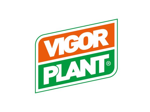 Vigor Plant